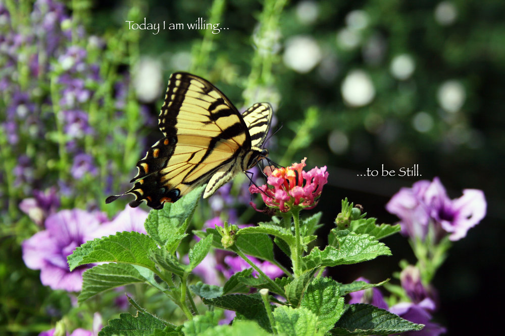 Butterfly on Lantana_Be Still.jpg