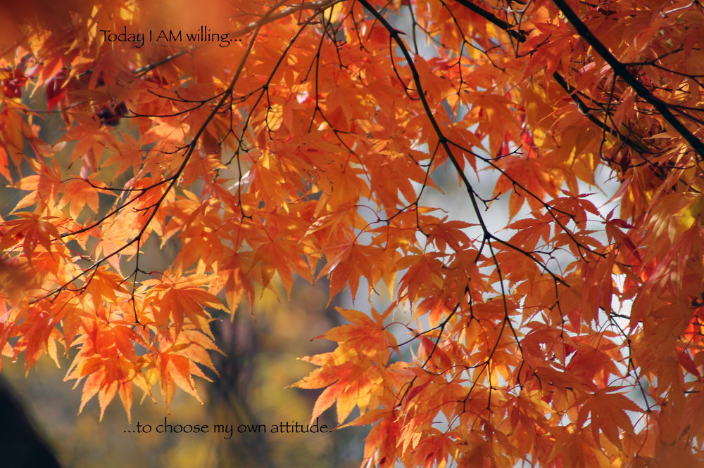 Fall leaves…choose attitude.jpg