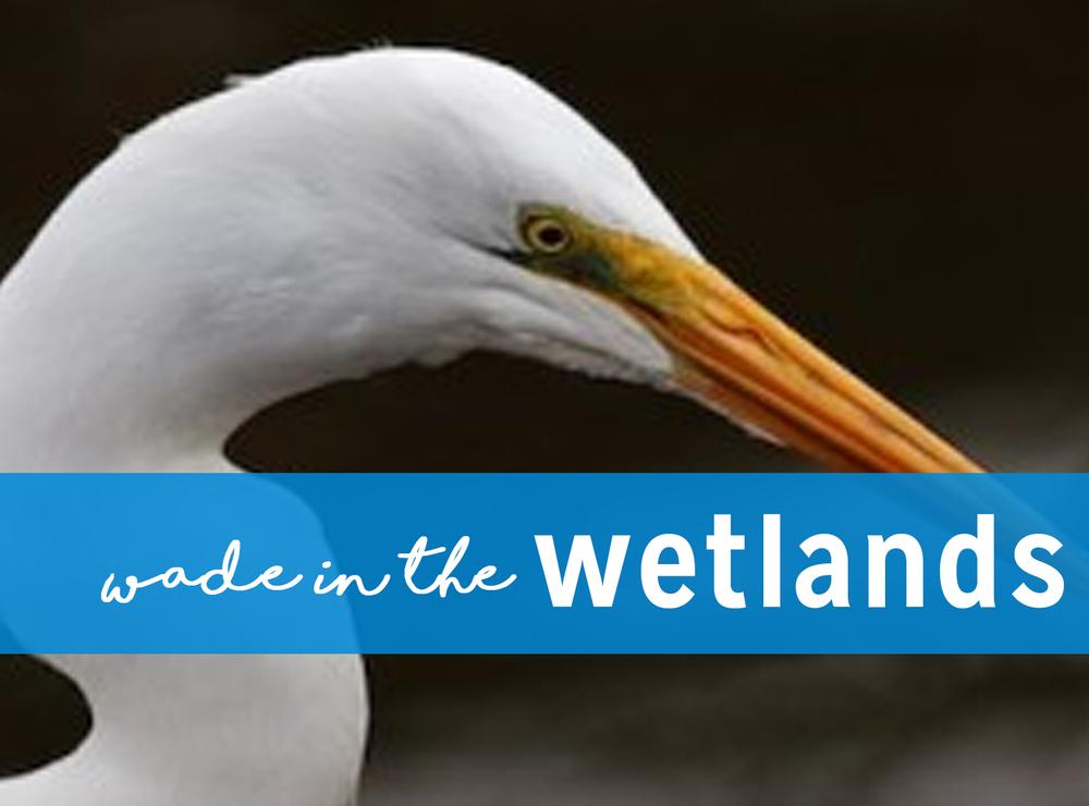 wetlandsbuttonnew.jpg