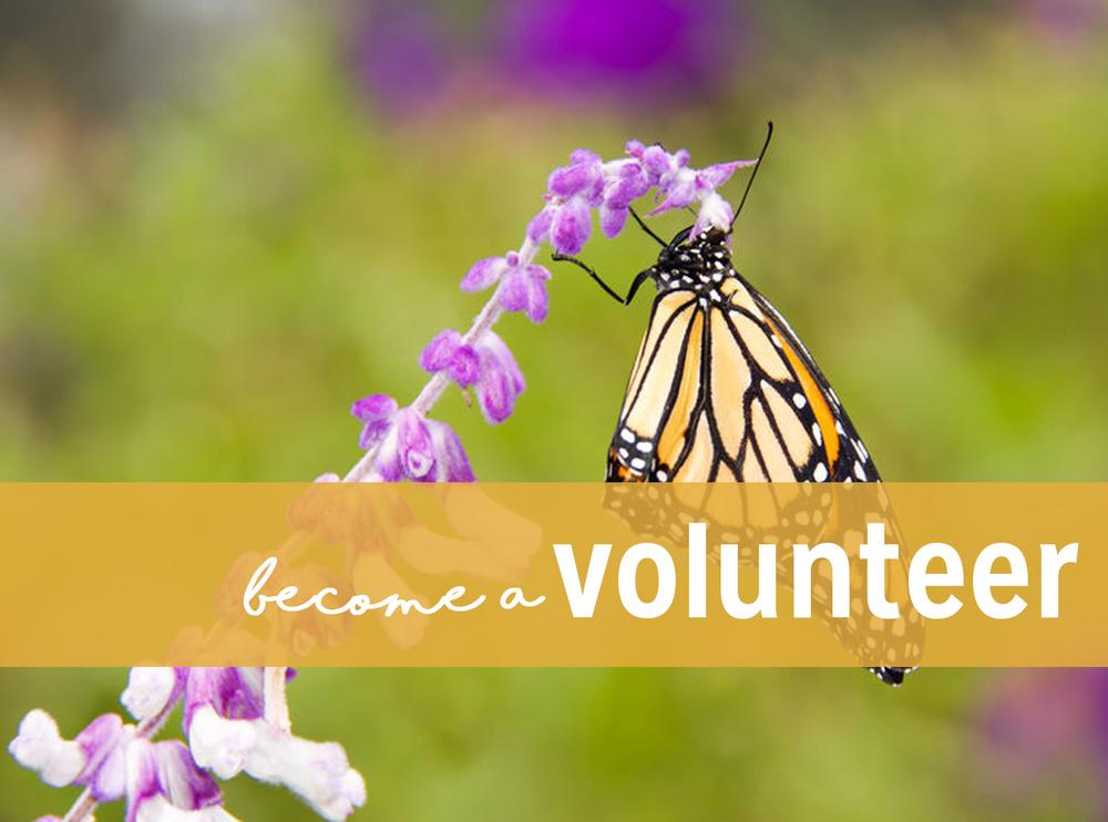 volunteeringbuttonnew.jpg