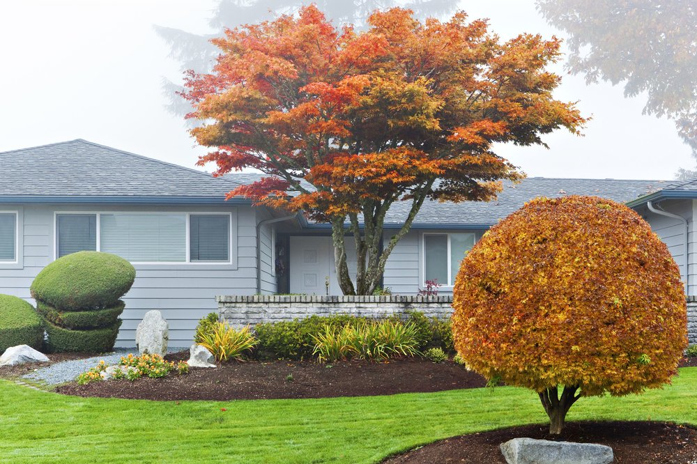 autumn-leaves-on-trees-in-front-of-house-482145455-59a60b16af5d3a001155c62f.jpg