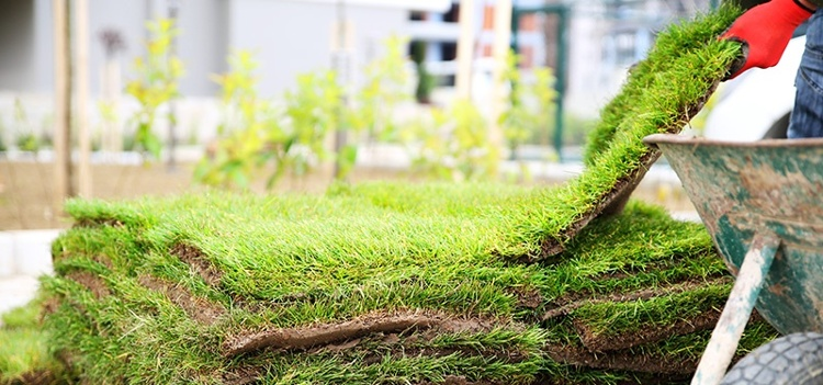 Image from Green Earth Landscaping Services