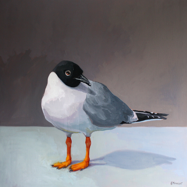 Bonaparte's Gull 2   2013 oil on canvas 30 x 30""