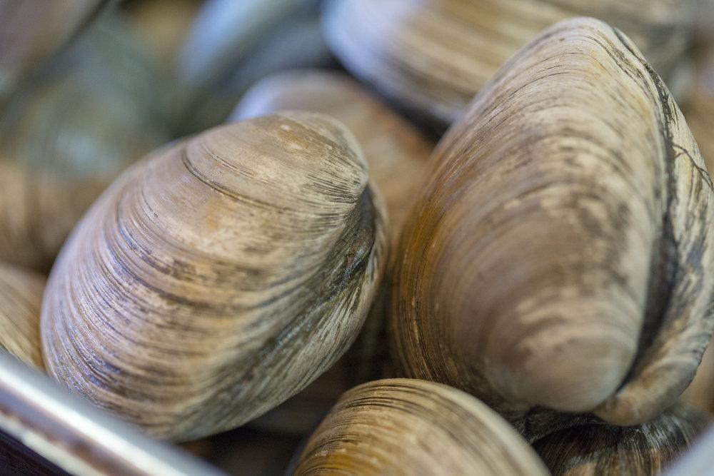 20180306_cfrf_sourcing_ri_seafood_058.jpg