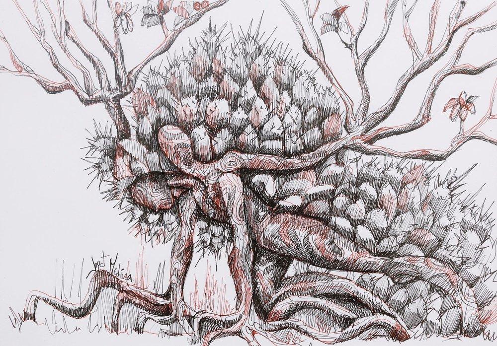 Sonoma Tree (2015)