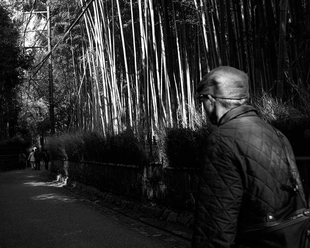 Bamboo Grove, Arashiyama, Japan. Spring 2015.