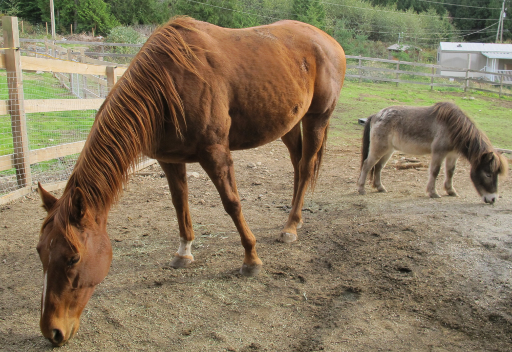 Roxy(left) and Joey(right), a couple of our horses.