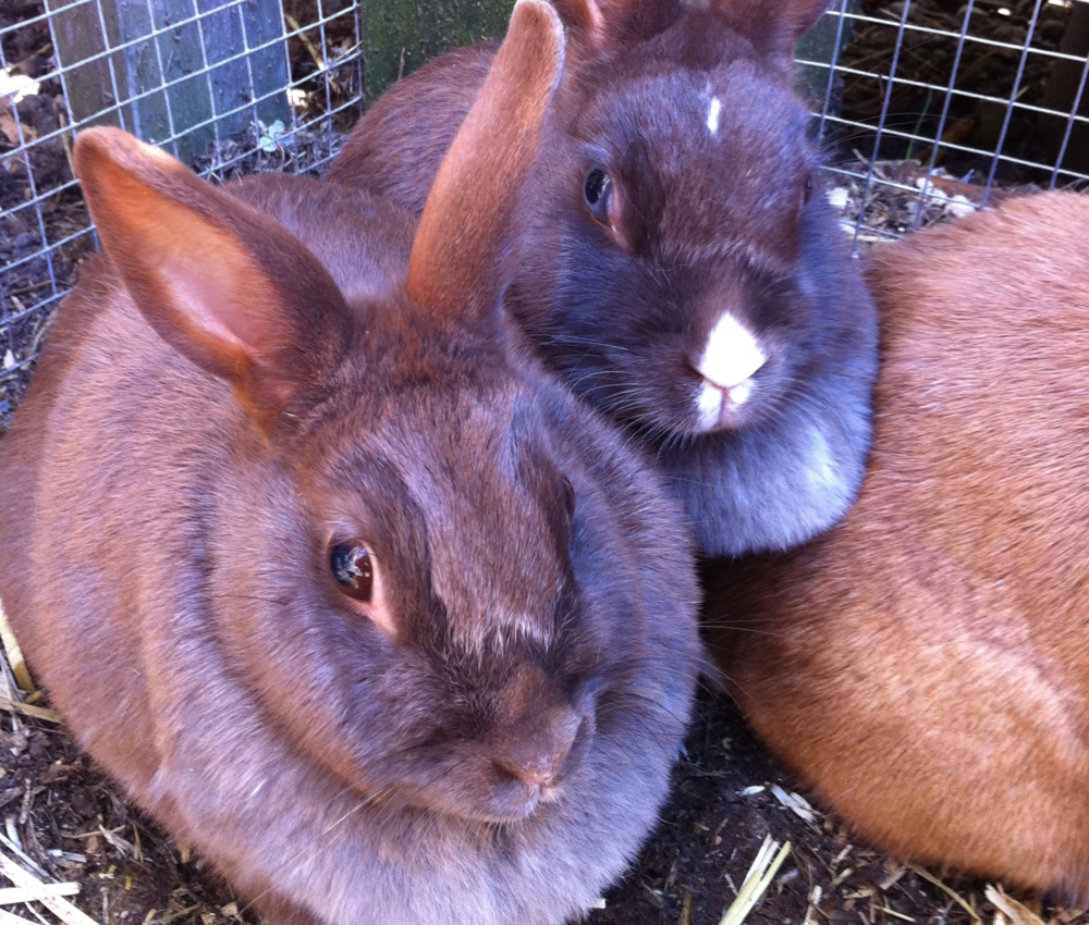 Our bunnies all love to cuddle in a big pile of fluffy softness! They also love to run around the stables.