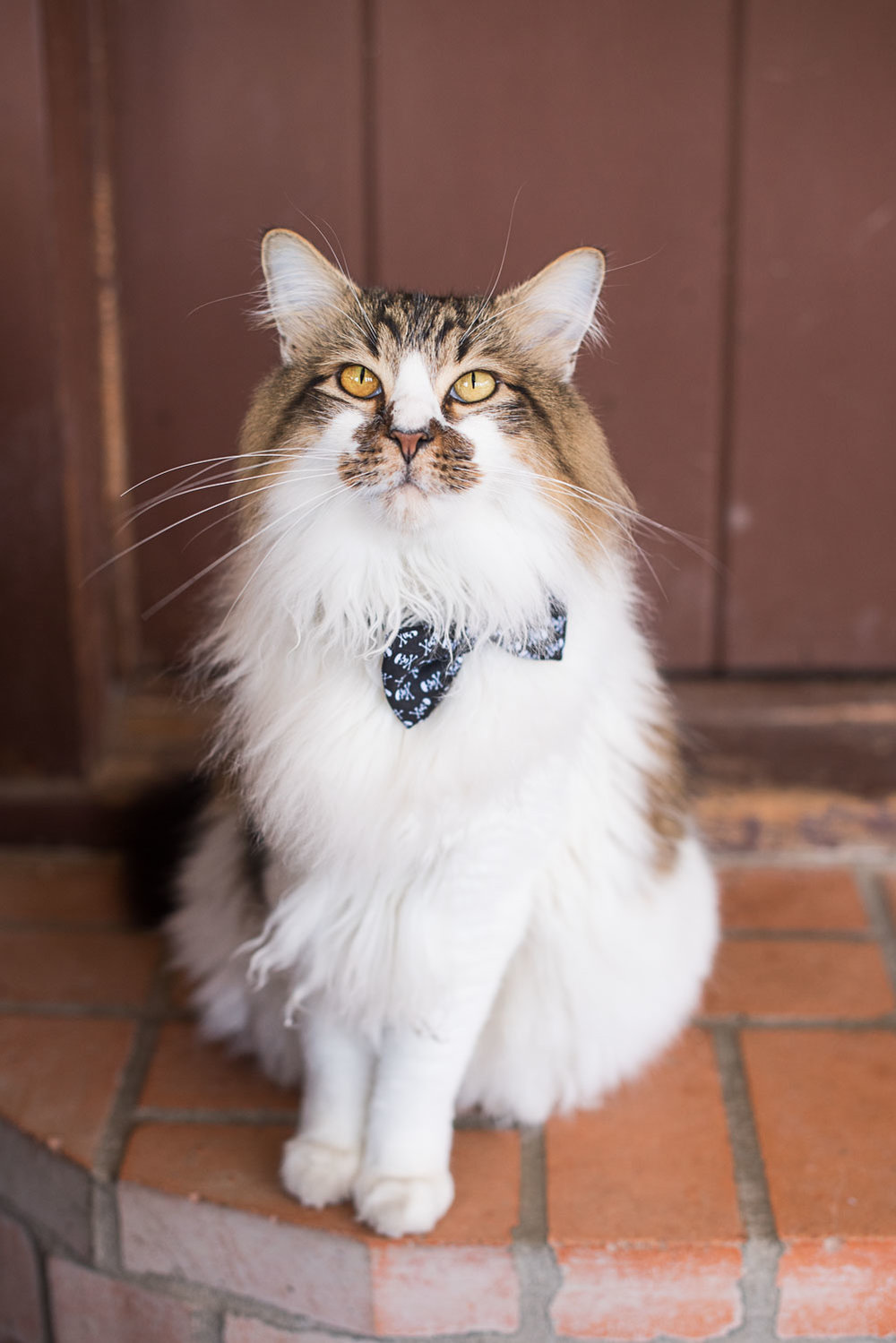 7 wedding cat crookshanks.jpg