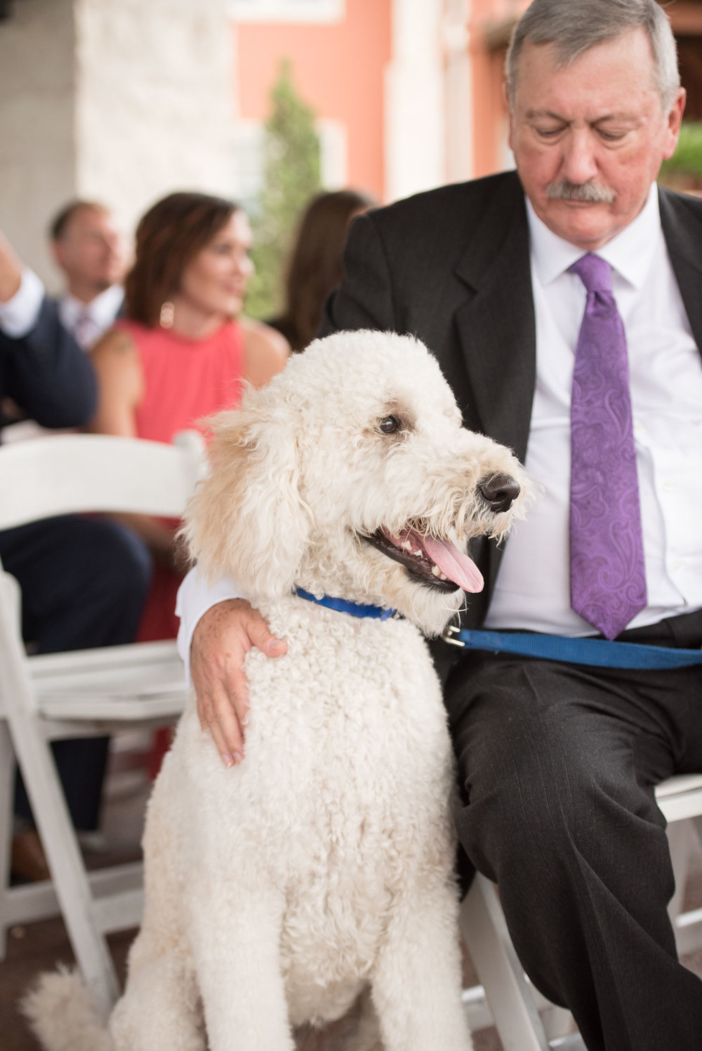 65 golden doodle at wedding ceremony.jpg