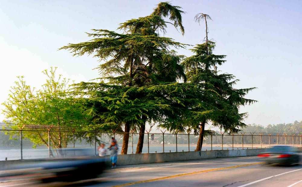 10-Cedar-#24,-Sil-ver-Lake,-2005.jpg