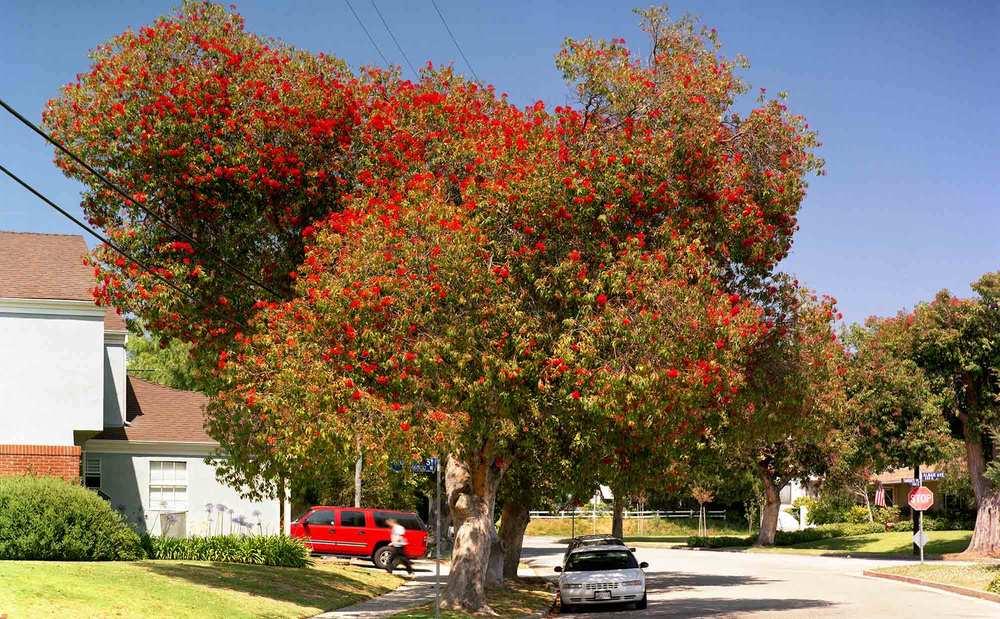 14-Eucalyptus-#29,-Pacific-Palisades,-2004.jpg
