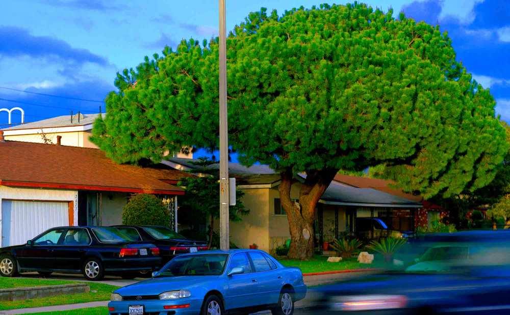 18-Pine-#10,-Gardena,-2005.jpg