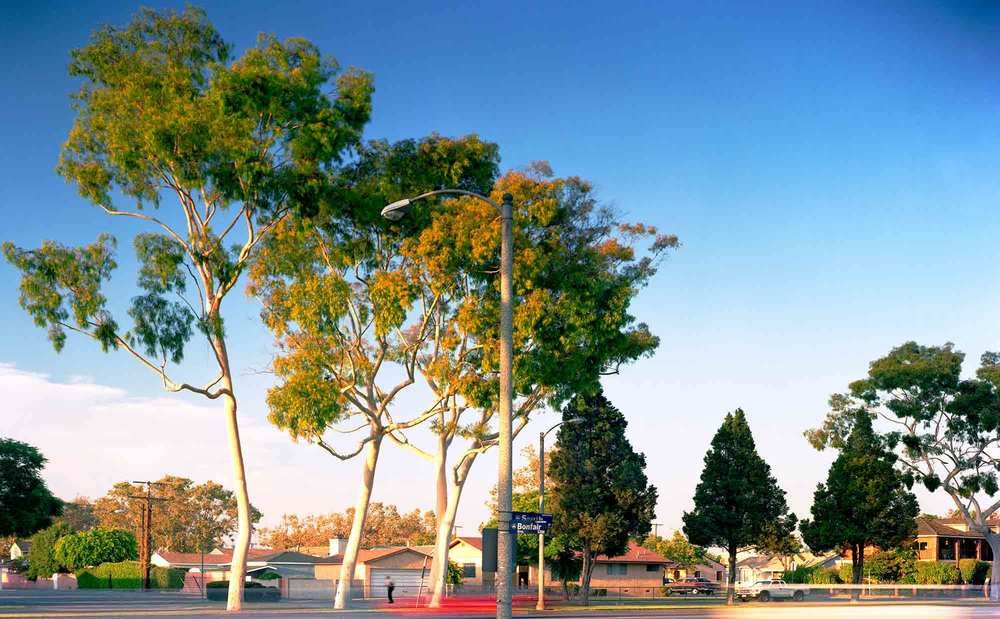25-Eucalyptus-#33-,-Lakewood,-2005.jpg