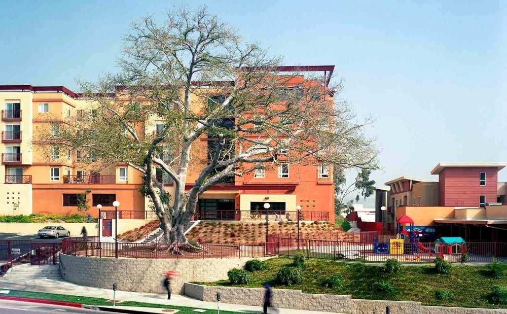 37-Ficus-#15,-Chinatown,-2005.jpg