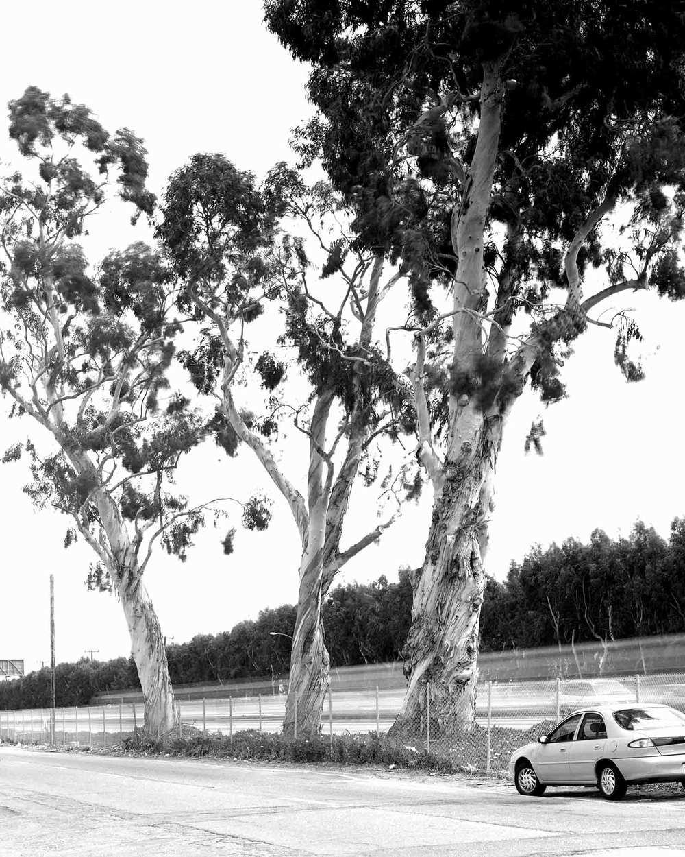 04-Eucalyptus-#3.jpg
