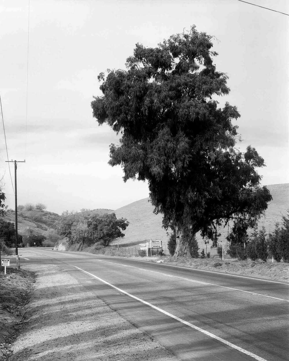 09-Eucalyptus-#9.jpg