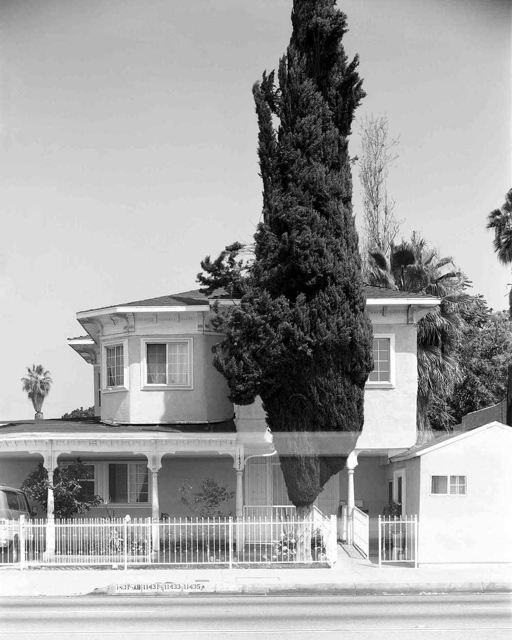 10-Cypress-#1.jpg