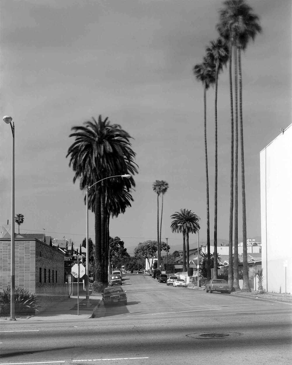 34-Palm-#3.jpg