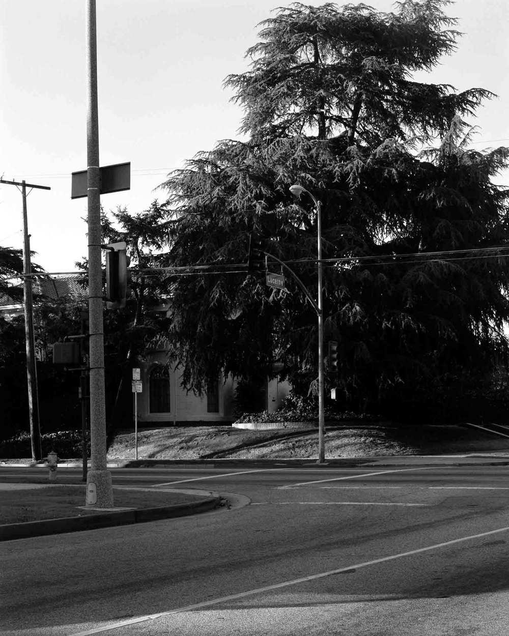 36-Cedar-#1-v2.jpg