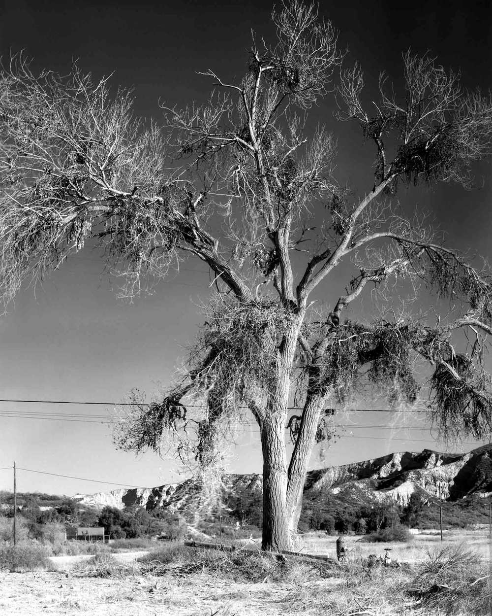 44-Cottonwood-#2.jpg
