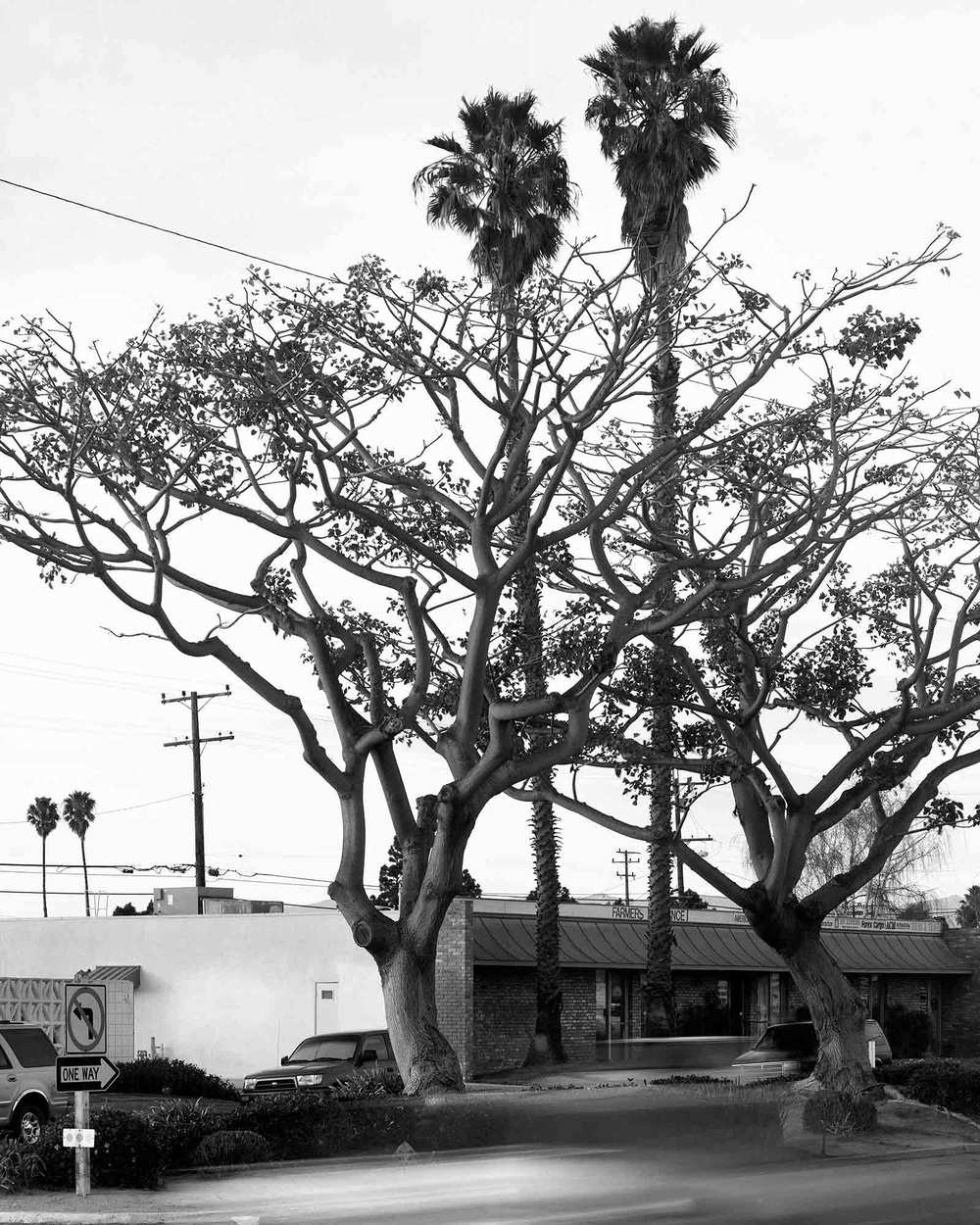 14-Coral-Tree-#4,-Camarillo,-2004.jpg