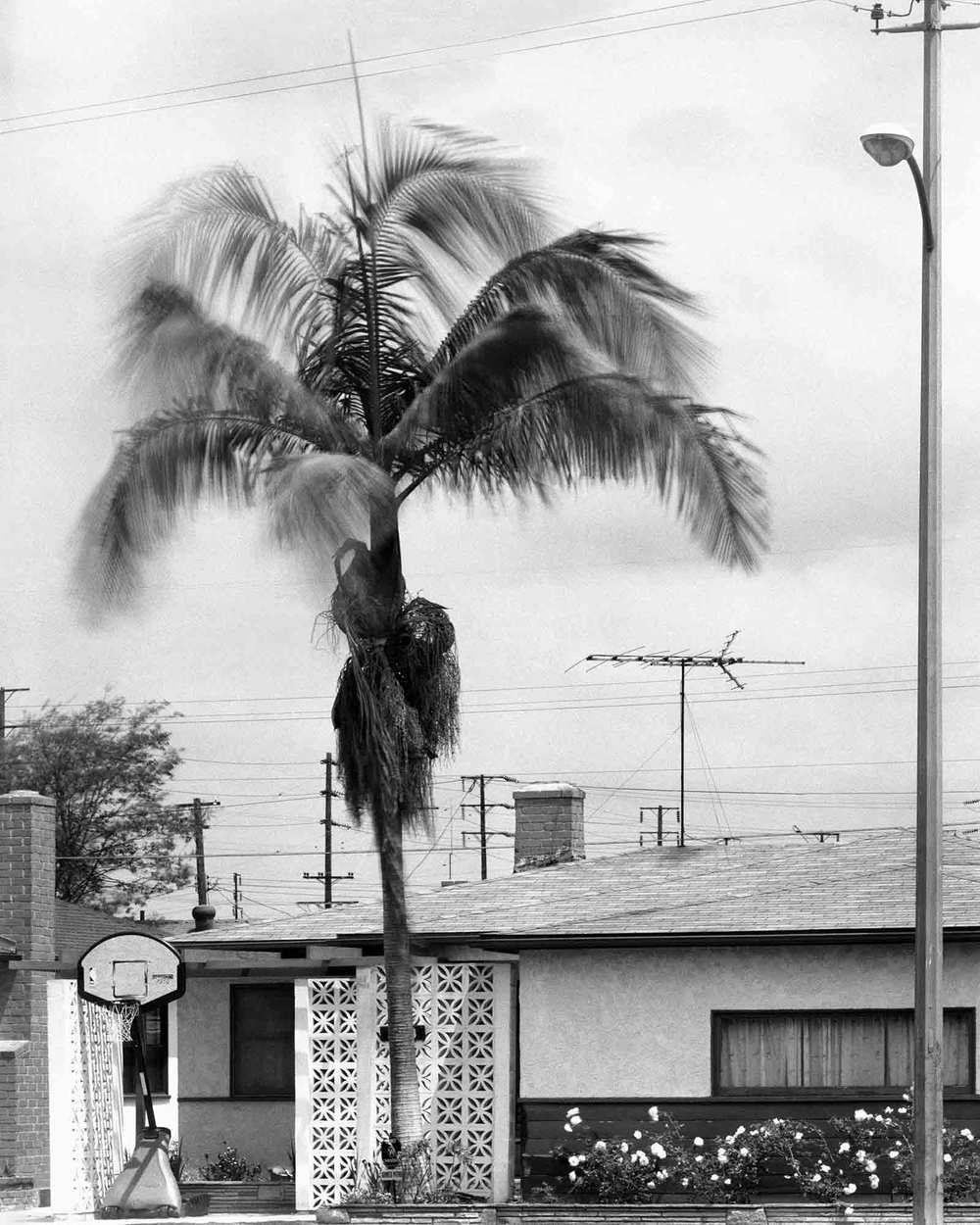 29-Palm-#19,-Compton,-2003.jpg