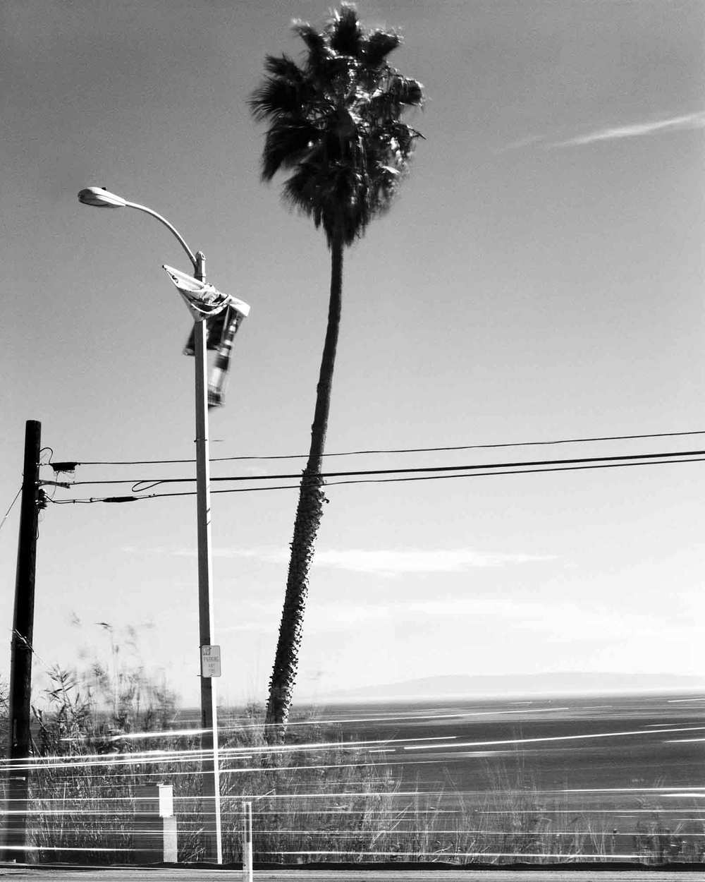 41-Palm-#13,-Topanga-Canyon,-2002.jpg