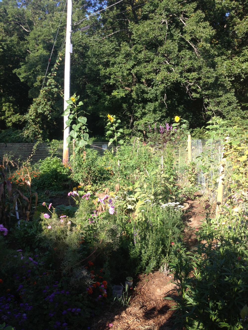 garden.web.jpg