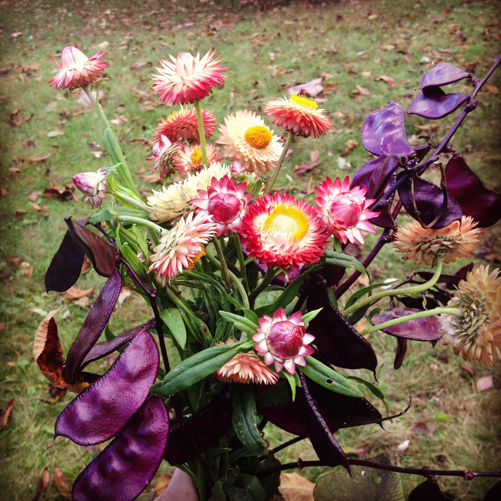 wildbouquet.web.jpg