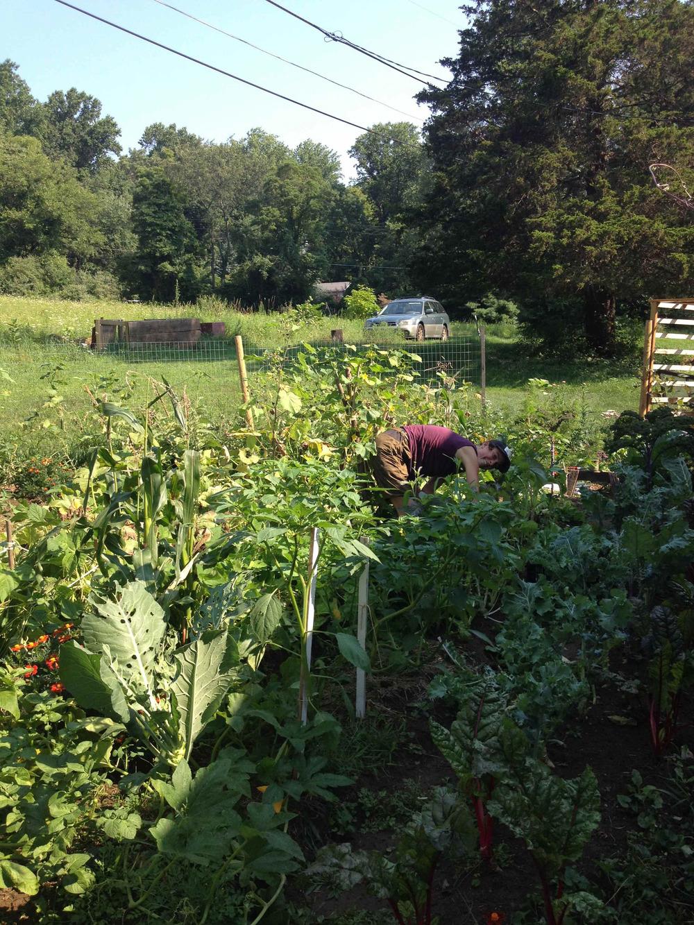 gardenharvesting.web.jpg