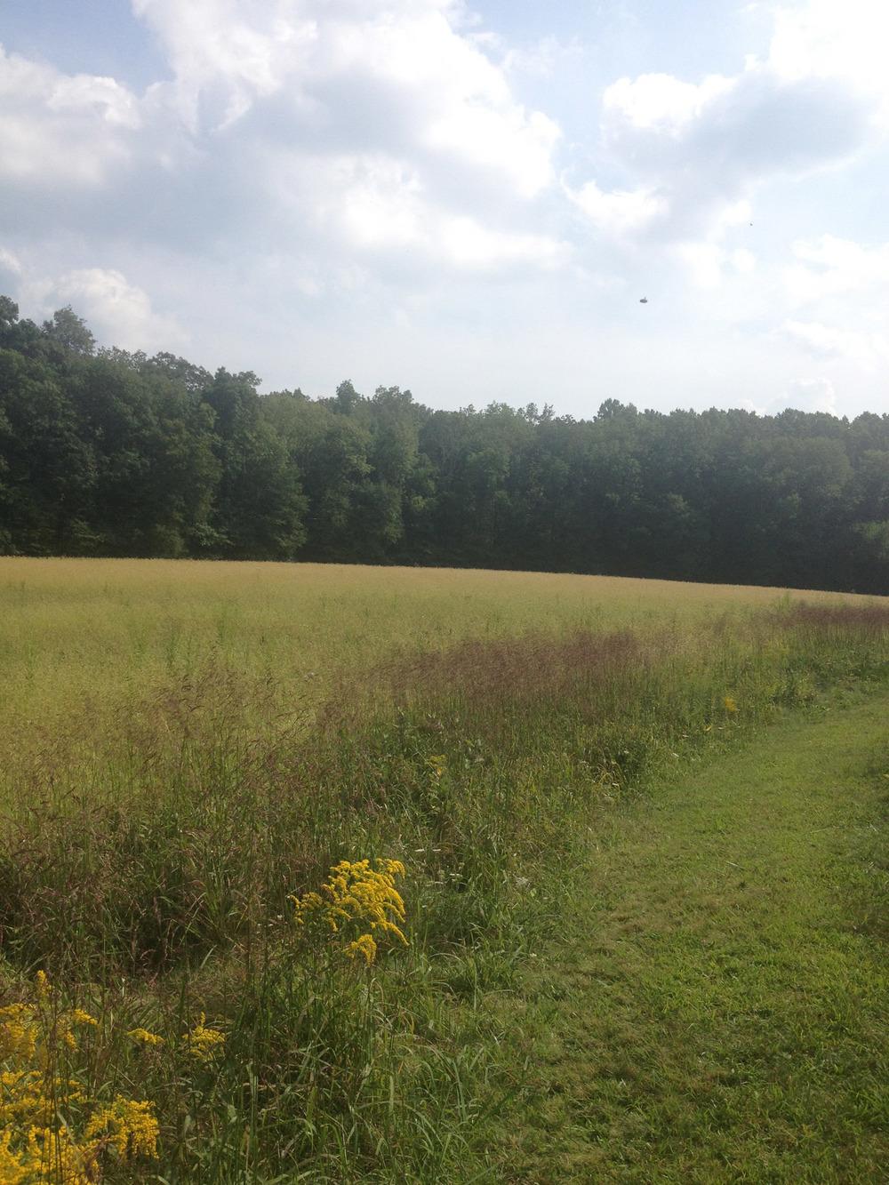 field.web.JPG