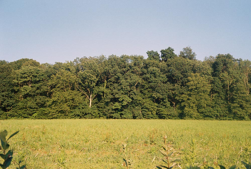 fieldamianweb.jpg