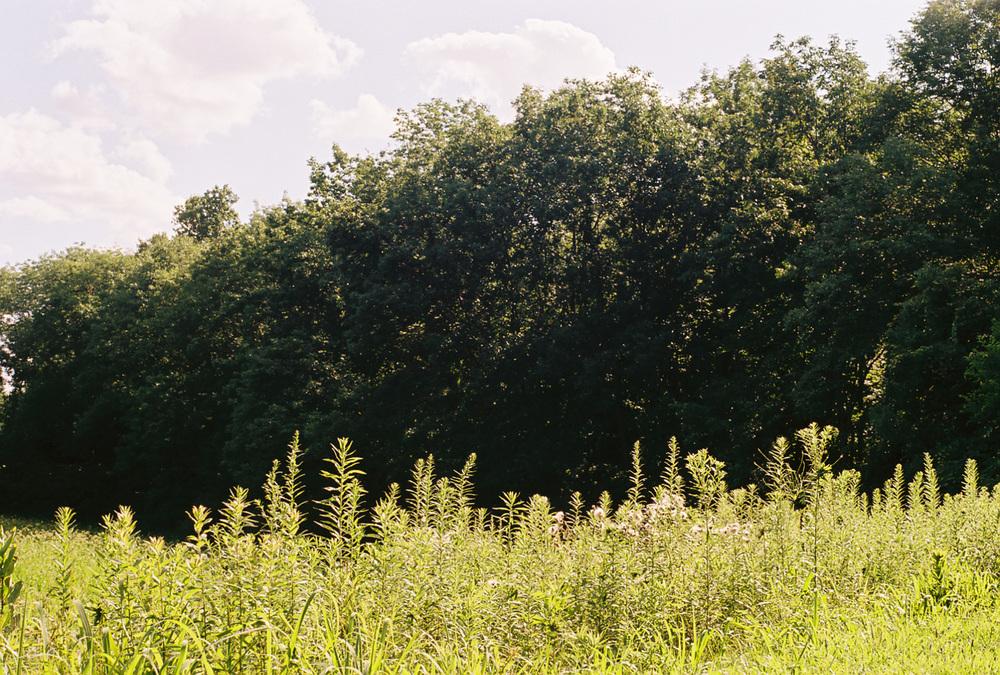 fieldflowersweb.jpg