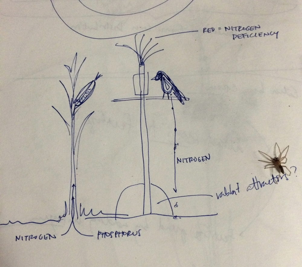 Nitrogen/Soil/Bird system sketch.