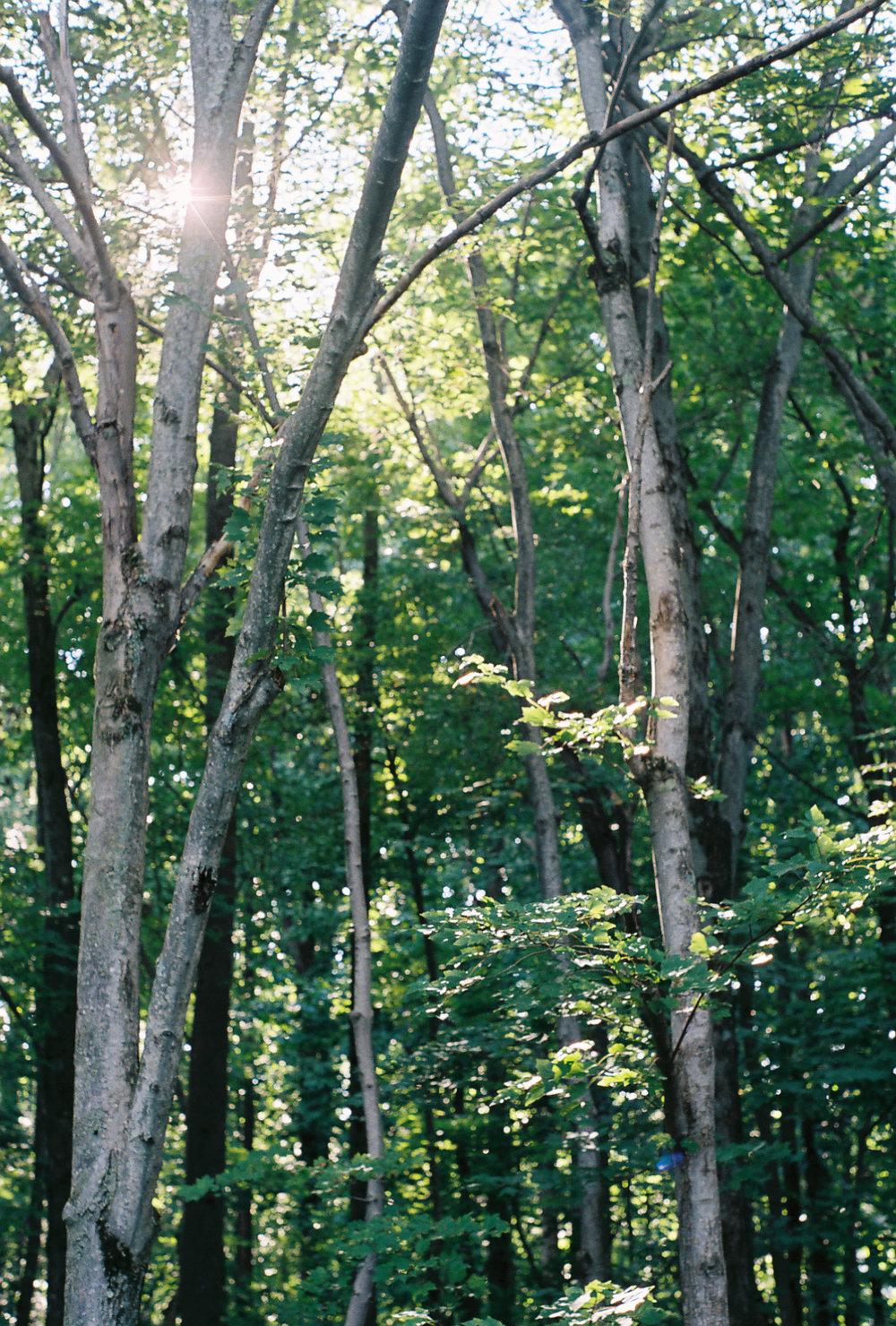 treesgoodforweb.jpg