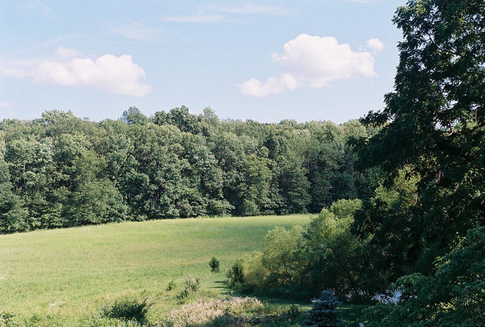 fieldgreenweb.jpg