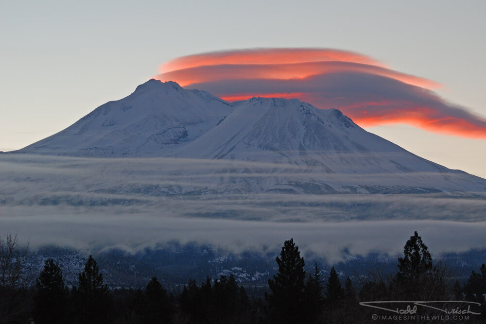 Shasta Morning Lenticular Clouds