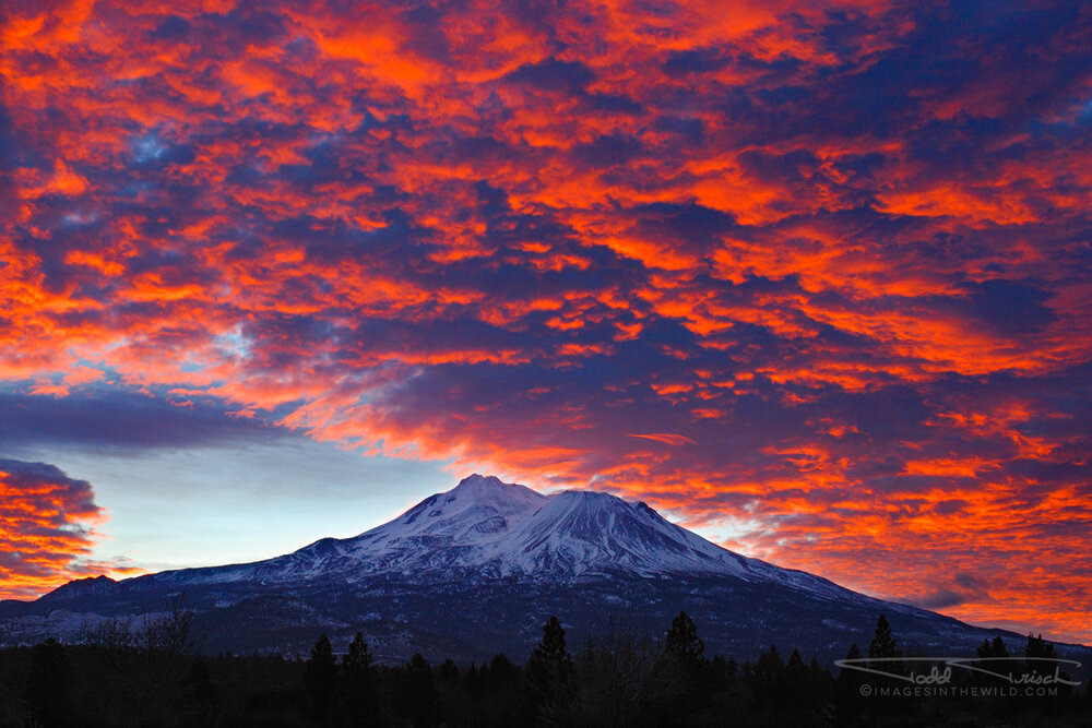 Mt Shasta Sunrise