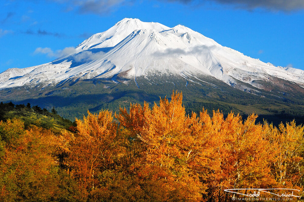 Mt Shasta Fall Colors