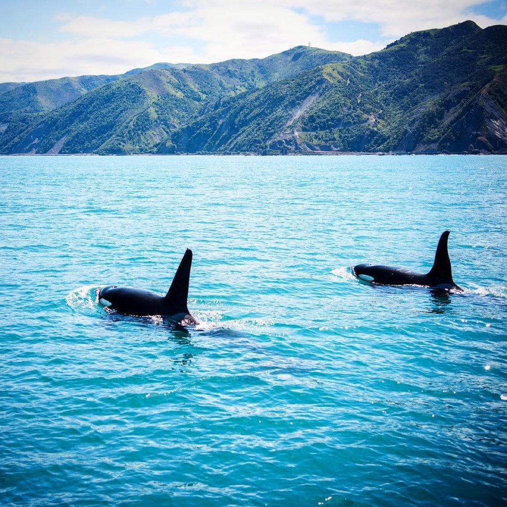 © Lauren Bath   took this photo from a   Whale Watch   boat.
