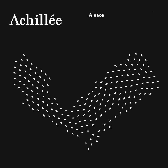 Achillee-Alsace.jpg