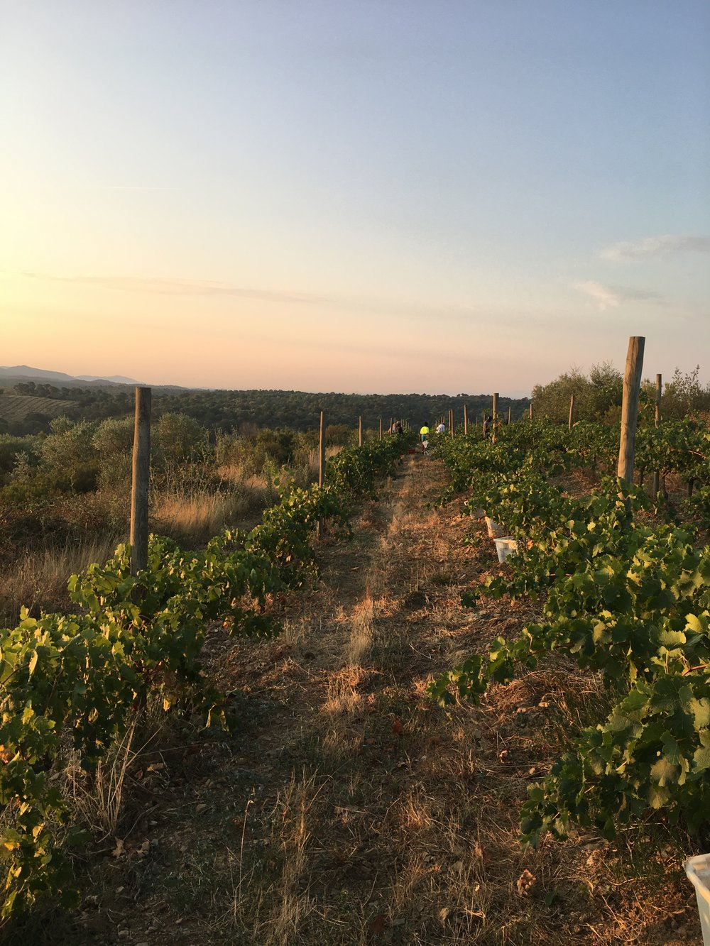 sunrise from our highest vineyard named: the legend