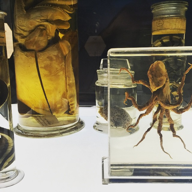 Cephalopod specimens
