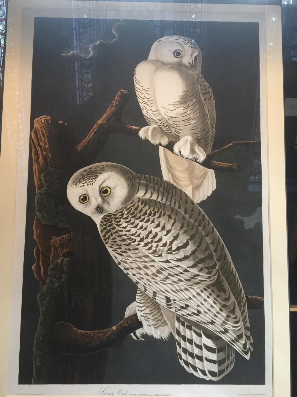 Audubon Owl painting