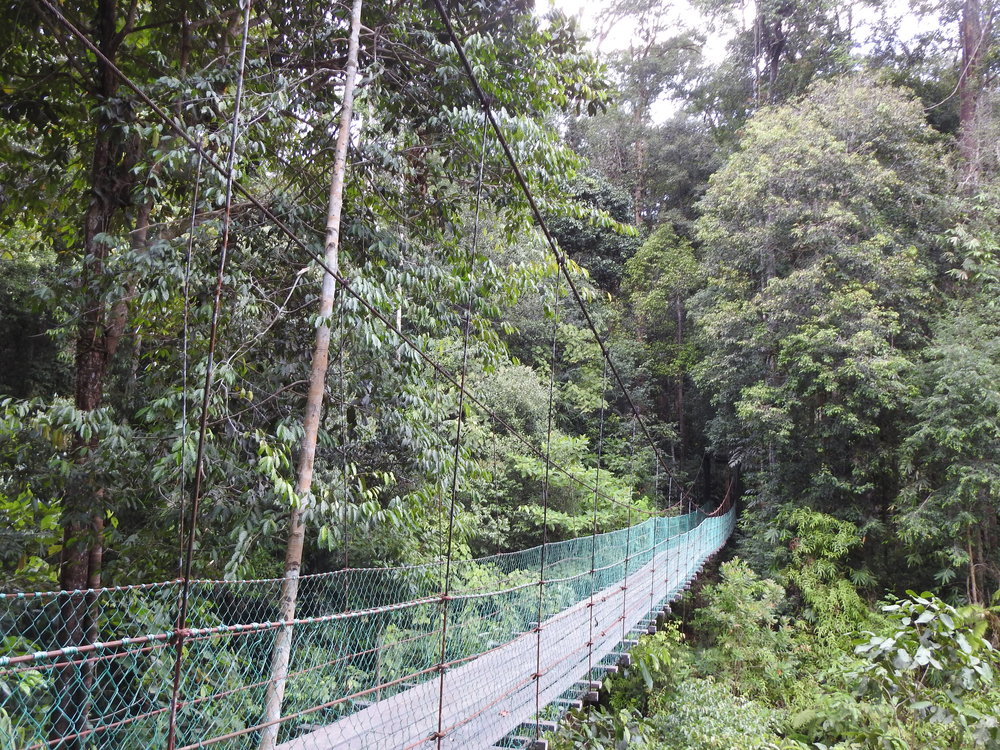 Bridge at Imbak Canyon