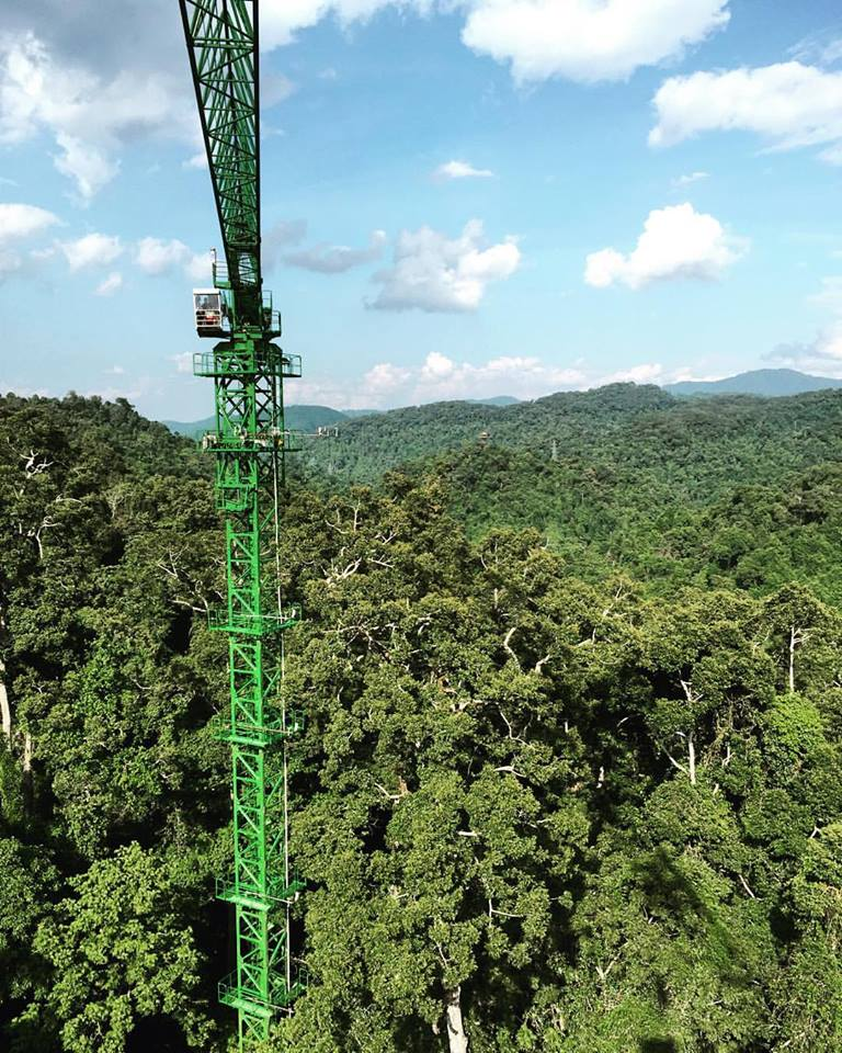 Canopy science, new technologies for understanding and conserving forest canopies -