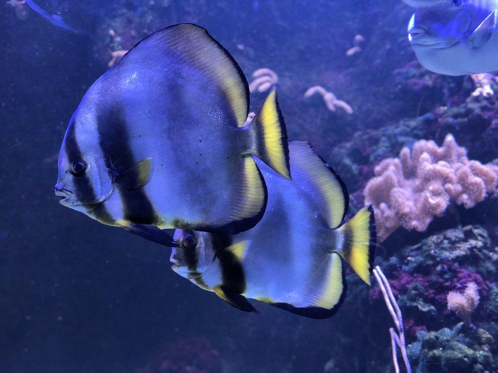 Aquarium tropical de la Porte Dorée