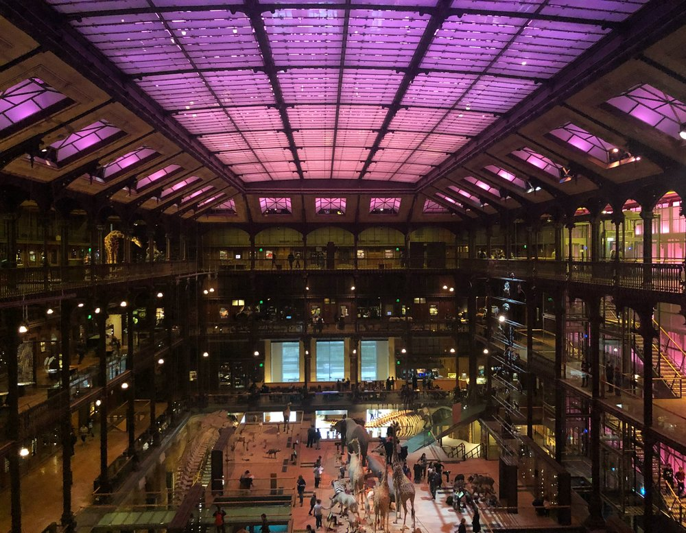 The ceiling of the Muséum national d'Histoire naturelle changes colours
