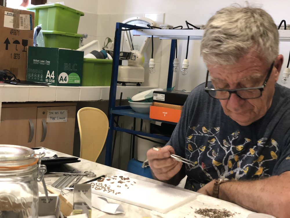Roger Kitching sorting moths